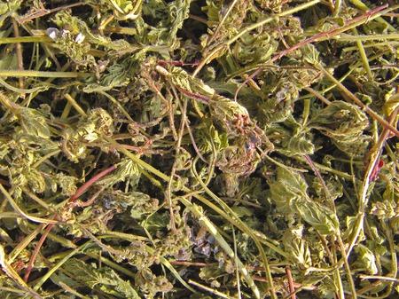 Вероника дубравная. Трава ручного сбора. Цена за 1 г. ручной работы на заказ