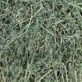 Дымянка (Дикая рута) лекарственная. Трава. Цена за 1 г.