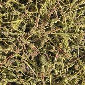 Вероника дубравная. Трава ручного сбора. Цена за 1 г.
