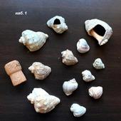 Ракушки рапана морские 3-7 см 2 набора Лот 1