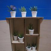 Мини-растения в горшочках в ассортименте