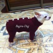 Зимние комбинезоны для маленьких собак