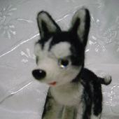 Собачка породы Хаски