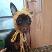 Шапочка на собаку