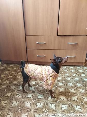 Свитшот на собаку ручной работы на заказ