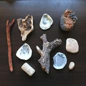 Морские находки дерево, ракушки и т.п. набор Лот 8