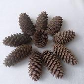 Декор из натуральных материалов - еловые шишки