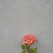 """Цветочная композиция """"Розы"""""""