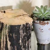 Пень часть ствола дерева с необычным спилом