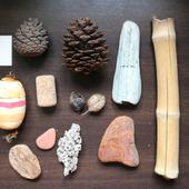 Морские находки набор 5 дерево шишки, ракушки и т.п