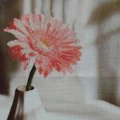 """Вышивка """"Розовая гербера"""""""