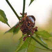 Брошь жук из бисера Озорник Тимоша 2. Жук с сердоликом и пайетками.
