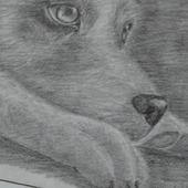 Карандашный рисунок собаки