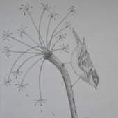 Рисунок карандашом птица
