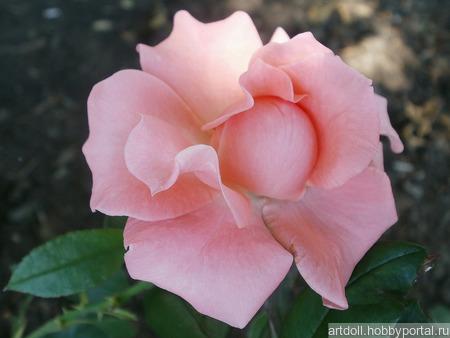 """Фото для печати и дизайна """"Принцесса Роза"""" ручной работы на заказ"""