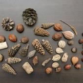 Орехи шишки пробки потрепанные морем