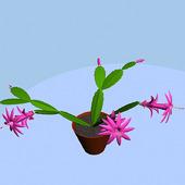 3d-модель растения Зигокактус