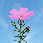 фото: Софт — цифровые товары (цветы)