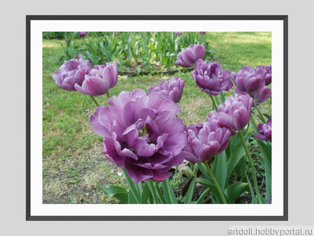 """Фото для печати и дизайна """"Тюльпаны"""" ручной работы на заказ"""