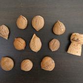 Орехи для декора дрифтвуд