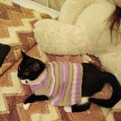 Свитер-безрукавка для кота