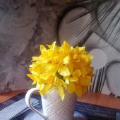 Нарциссы в чашке
