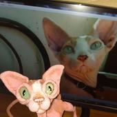 Сфинкс - с тонировкой по фото вашего котика