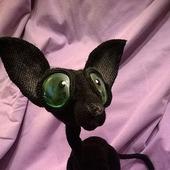 Сфинкс - лысый черный кот