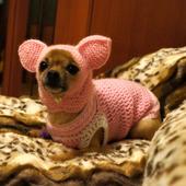 фото: Одежда для собак