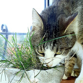 Пиала для кошачьей травки