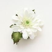 Хризантема брошь большая белая с цветком из фоамирана