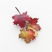 Брошь кленовые листья осенние разноцветные из фоамирана